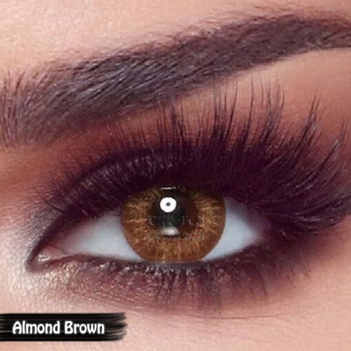 Bella One Day Almond Brown Alwaleed Optics 510x510 - Bella One Day Contact Lenses